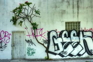 Graffiti Tree-Wynwood Art Dsitrict